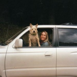 "My ""soul"" dog, Penrod, in an earlier favorite vehicle, my Toyota 4-Runner"