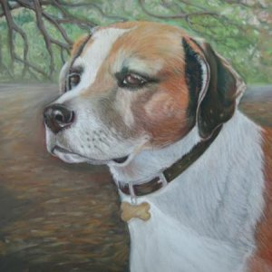 Jack a mixed breed done in pastel