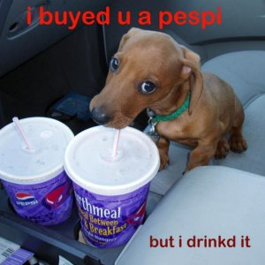 this doxie likes pepsi