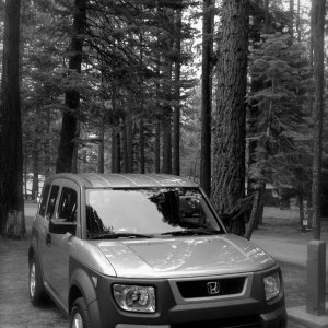 """Rico"" at the Tahoe Valley Campground for the Element Owners Club Campathon"